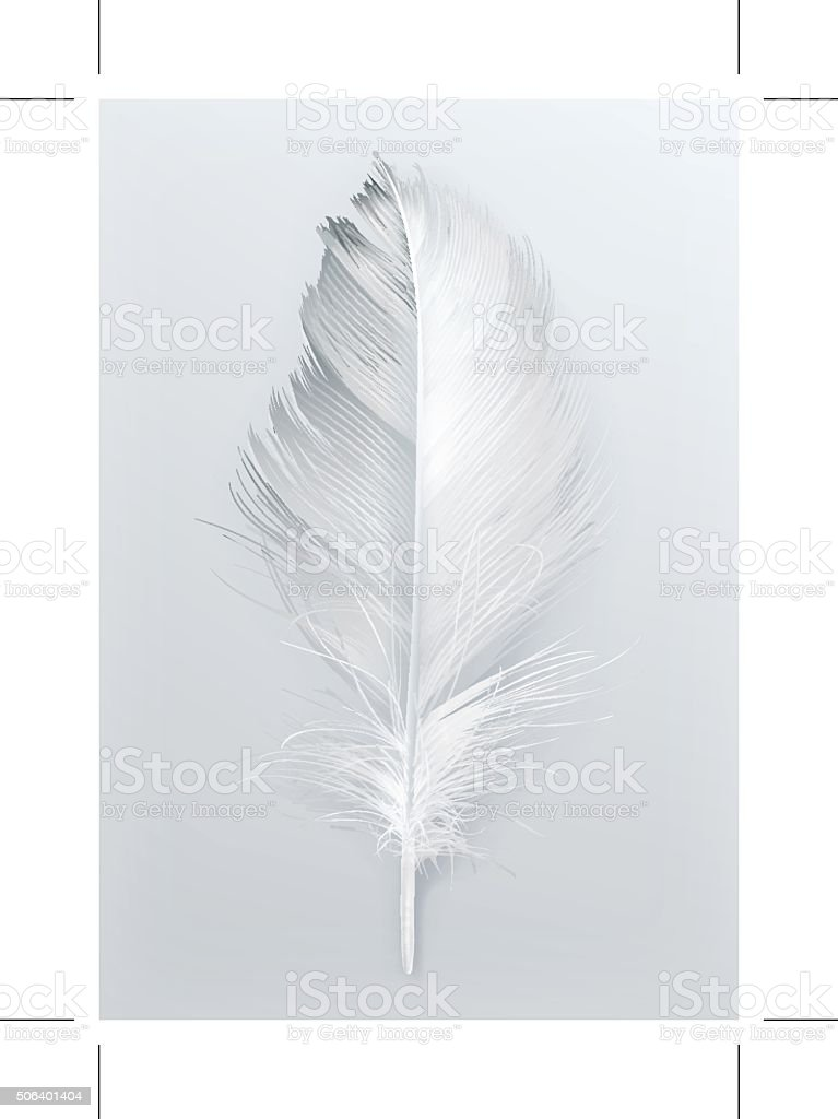 Bird feather vector icon vector art illustration