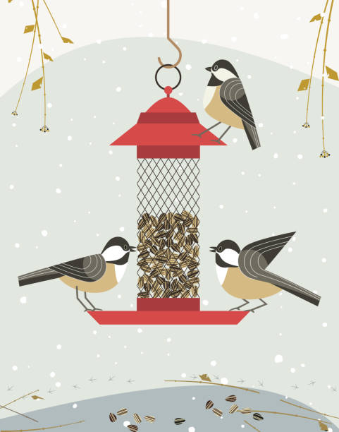 Bird feeding icon Cute black capped chickadee bird poster. Comic flat cartoon. Minimalism simplicity design. Winter birds feeding by sunflower seeds feeder. Template bird watching card background. Vector illustration chickadee stock illustrations