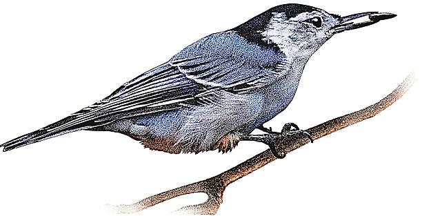Bird Feeding On Seeds vector art illustration