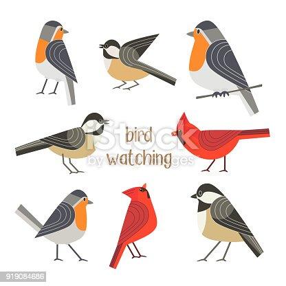 Birdwatching icon set. Red Northern cardinal, robin chickadee bird pose. Comic flat cartoon. City park backyard birds sign. Minimalism simplicity design. Wildlife banner element. Vector illustration
