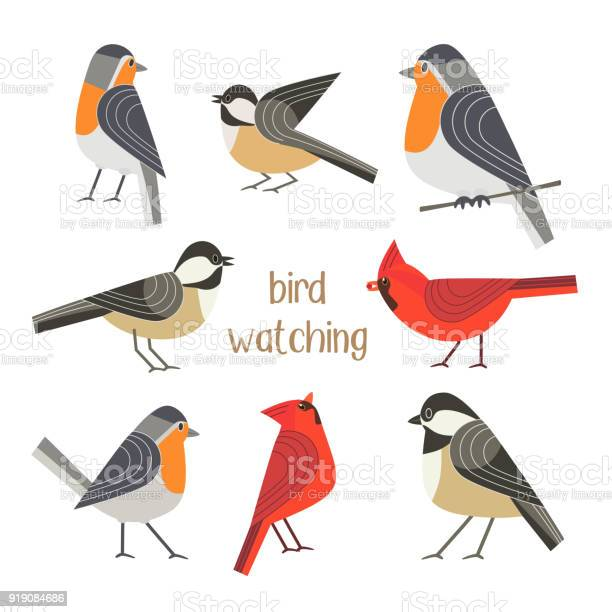 Bird feeding poster vector id919084686?b=1&k=6&m=919084686&s=612x612&h=q2vmsz1khn21smpun6qyqe7nev5vsgisocbwdarknii=