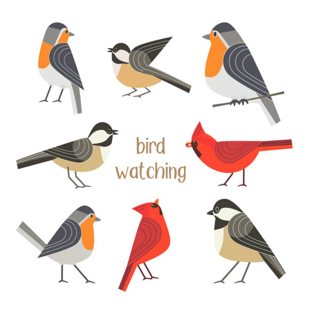 bird feeding poster - birds stock illustrations