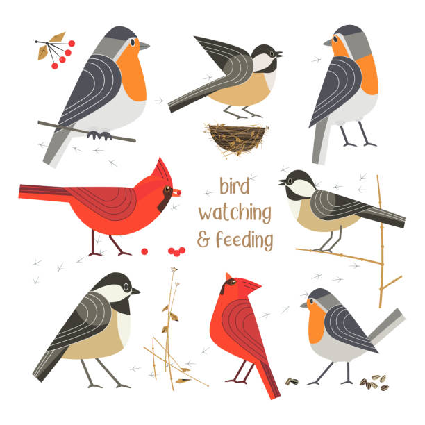bird feeding poster - bird watching stock illustrations, clip art, cartoons, & icons