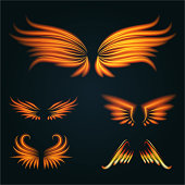 Bird fire wings vector fantasy feather burning fly mystic glow fiery burn hot art wings illustration on black
