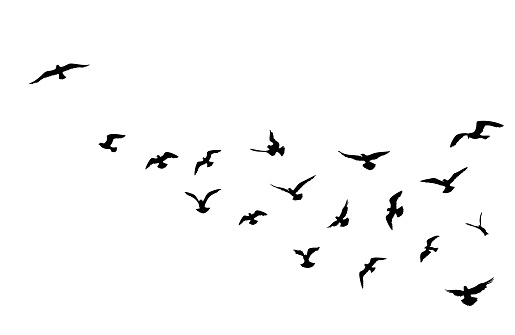 Bird flock flying over blue sky background. Animal wildlife.