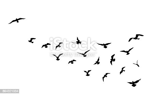 Bird flying silhouette over sky background. Animal wildlife skyline