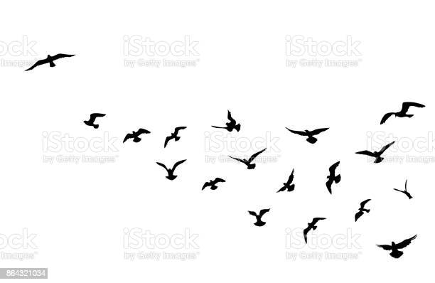 Bird flock flying over blue sky background animal wildlife vector id864321034?b=1&k=6&m=864321034&s=612x612&h=xcla8p avy1lkablnjlnbzfh rl0lrzodphc4n7grbk=