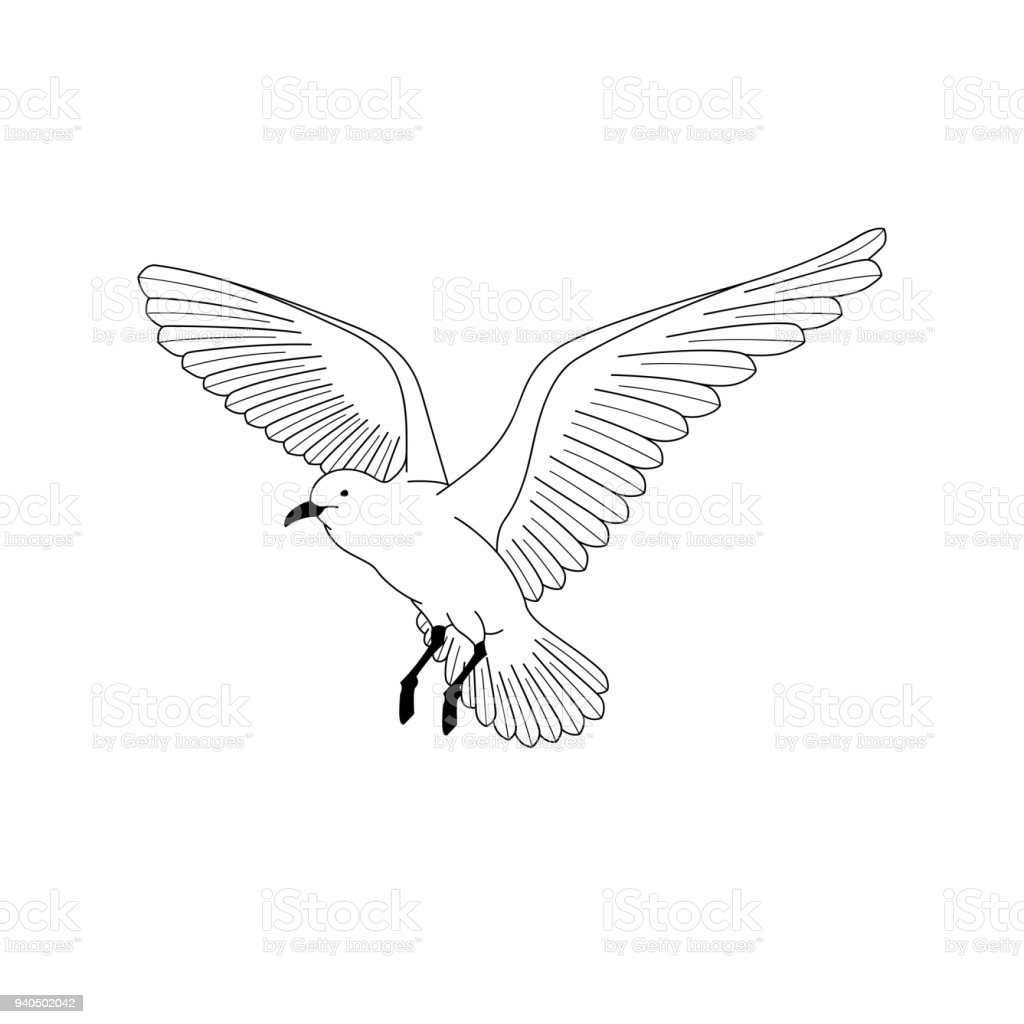 Oiseau Qui Vole Illustration De Vecteur Dessin Dessin Au Trait De