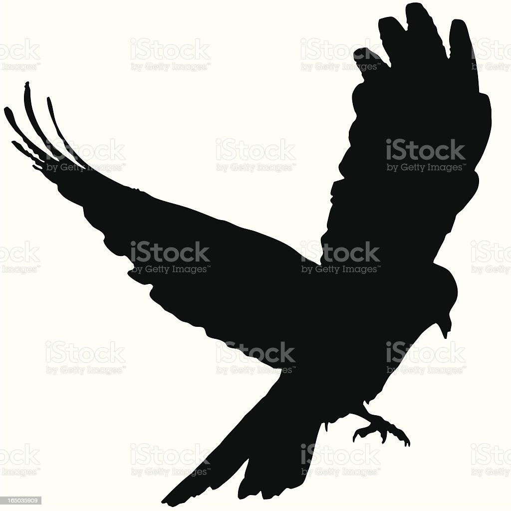 royalty free common raven clip art vector images illustrations rh istockphoto com  raven clipart free