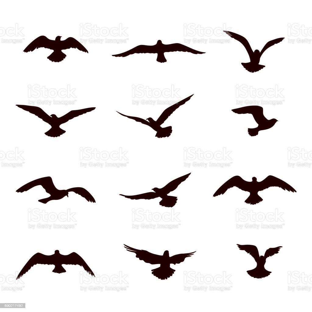 Bird flying silhouette set. Wildlife icon collection vector art illustration
