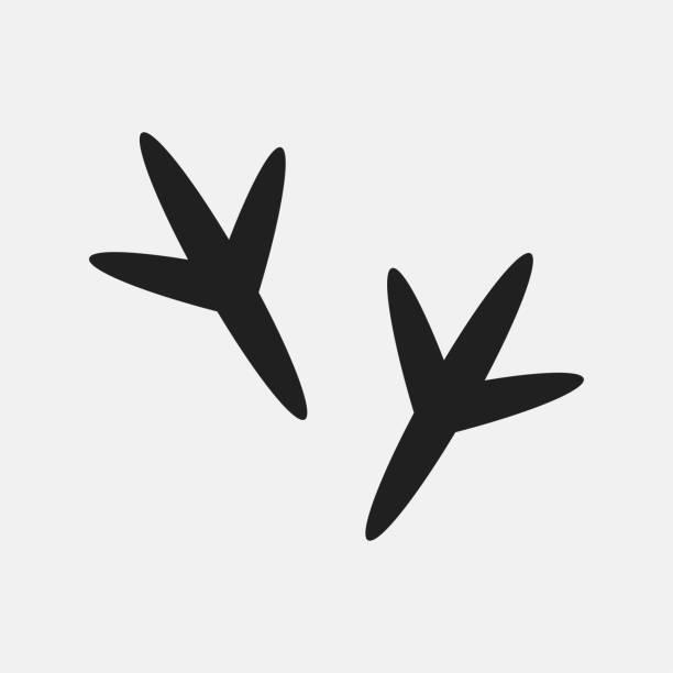 Bird footprint icon illustration Bird footprint icon illustration isolated vector sign symbol chicken bird stock illustrations