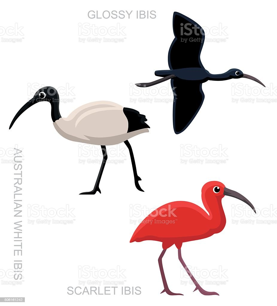 Bird Ibis Set Cartoon Vector Illustration