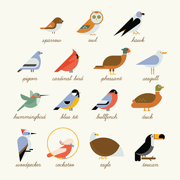 Bird icon collection Bird icon collection. Different birds species like: owl, toucan, hummingbird, bullfinch and more vector illustration birds chickadee stock illustrations