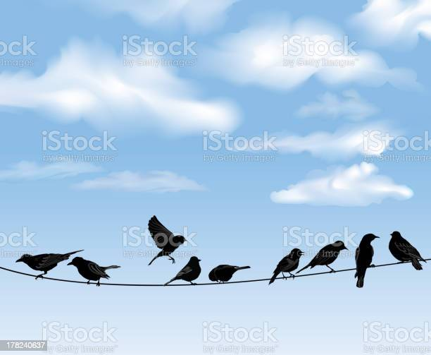 Bird icon set sky background vector illusrtation vector id178240637?b=1&k=6&m=178240637&s=612x612&h=eehviam1tlxndl0pxatuifmgjz1zuscoalirwyl3jv0=