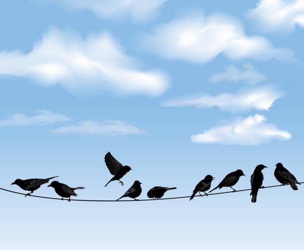 stockillustraties, clipart, cartoons en iconen met bird icon set. sky background. vector illusrtation - neerstrijken