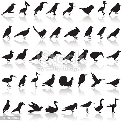 Bird icon set on a white background with a shadow