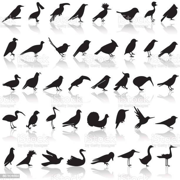 Bird icon set vector id867828554?b=1&k=6&m=867828554&s=612x612&h=4lfxxfw wtiknnkld8hip3 dqo gdhaxuxmjvzmxnge=