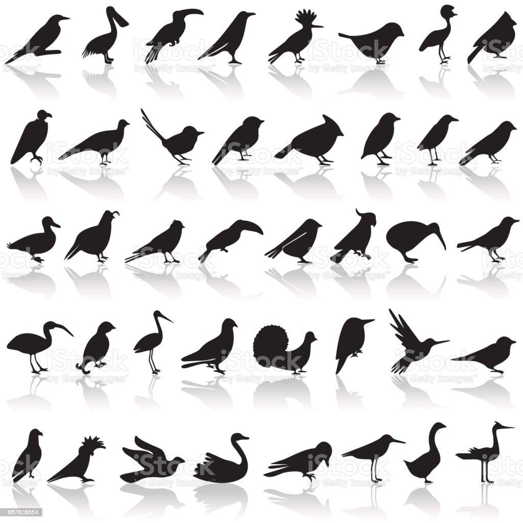 Ensemble d'icônes d'oiseaux - Illustration vectorielle