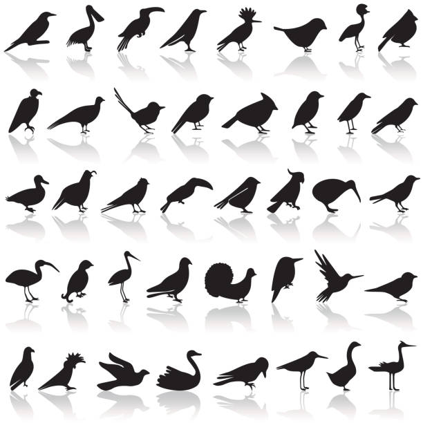 bird icon set - birds stock illustrations