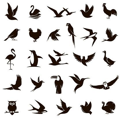 bird icons set