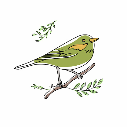 Bird illustration. Collection of cute hand drawn bird doodles. Line style in minimalism on white vector picture