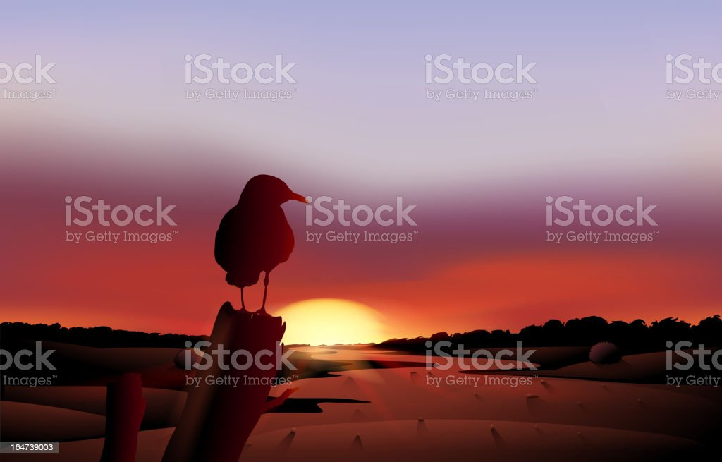 Bird in a sunset view of the desert royalty-free stock vector art