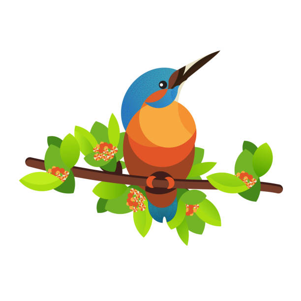 stockillustraties, clipart, cartoons en iconen met vogel kingfisher op een tak. vector illustratie. - ijsvogels