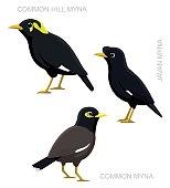 Bird Myna Set Cartoon Vector Illustration