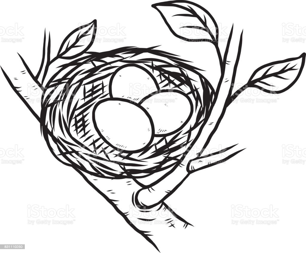 Line Drawing Nest : Bird nest and three eggs stock vector art more images of