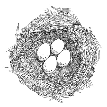 Bird Nest with Eggs Pen and Ink Vector Drawing