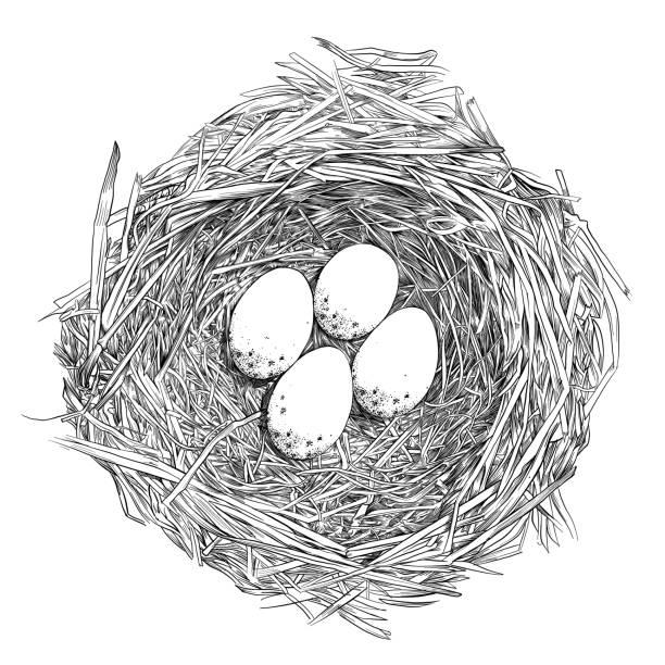 bildbanksillustrationer, clip art samt tecknat material och ikoner med bird nest ägg penna och bläck vektor ritning - bo