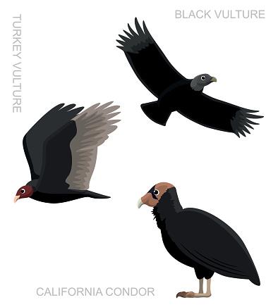 Bird New World Vulture Set Cartoon Vector Illustration