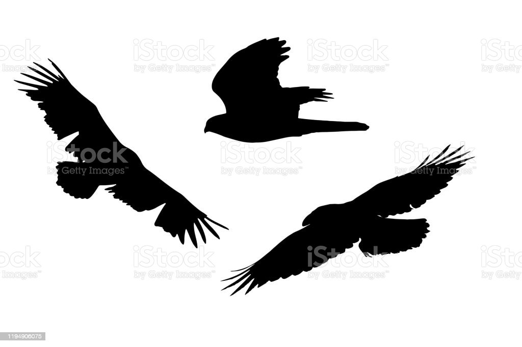 Bird Of Prey Flying Birds Vector Image White Background Stock Illustration Download Image Now Istock
