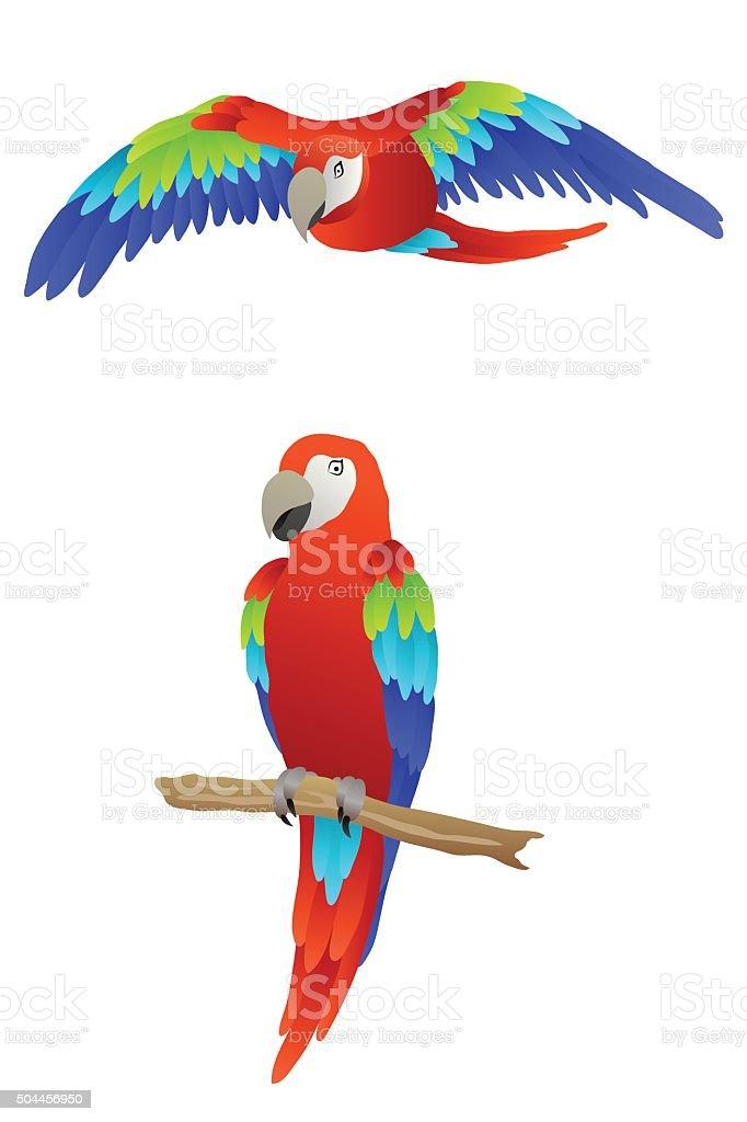Vogel Papagei Ara Isoliert Rot Grün Und Blau Vektorillustration ...