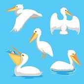 Bird Pelican Poses Cartoon Vector Illustration