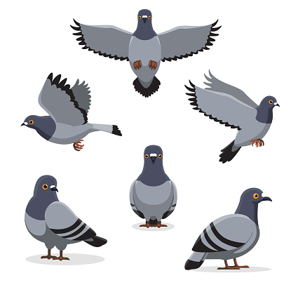 Bird Pigeon Poses Cartoon Vector Illustration