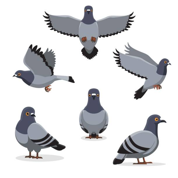 Bird Pigeon Poses Cartoon Vector Illustration Animal Cartoon EPS10 File Format pigeon stock illustrations