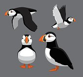 Bird Poses Atlantic Puffin Vector Illustration