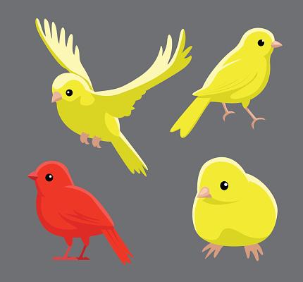 Bird Poses Domestic Canary Vector Illustration