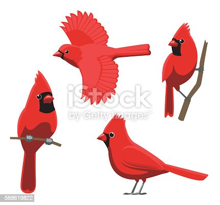 istock Bird Poses Northern Cardinal Vector Illustration 588619822