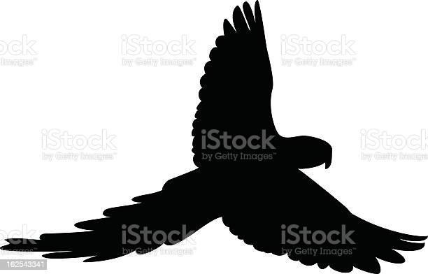 Bird silhouete vector id162543341?b=1&k=6&m=162543341&s=612x612&h=ijrexmnt6ctw1fm2ld3429m1l5uue do5lvjybfnkdo=