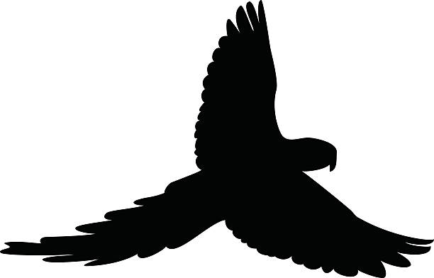 ilustrações de stock, clip art, desenhos animados e ícones de pássaro silhouete - arara