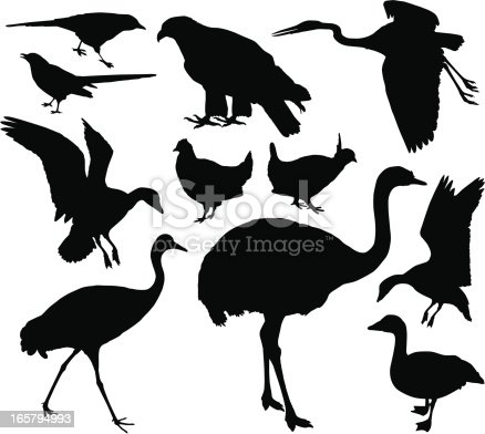 A collection of bird silhouettes.