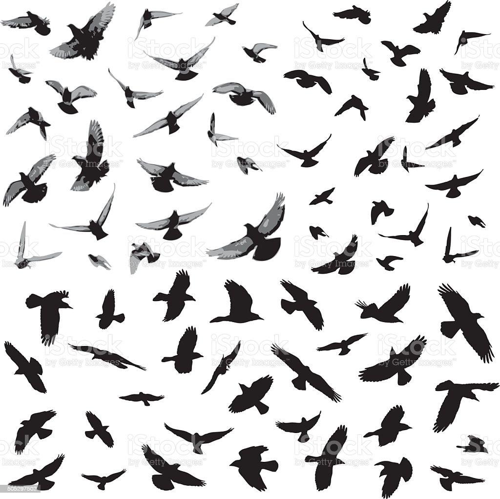 bird silhouettes stock vector art amp more images of bird