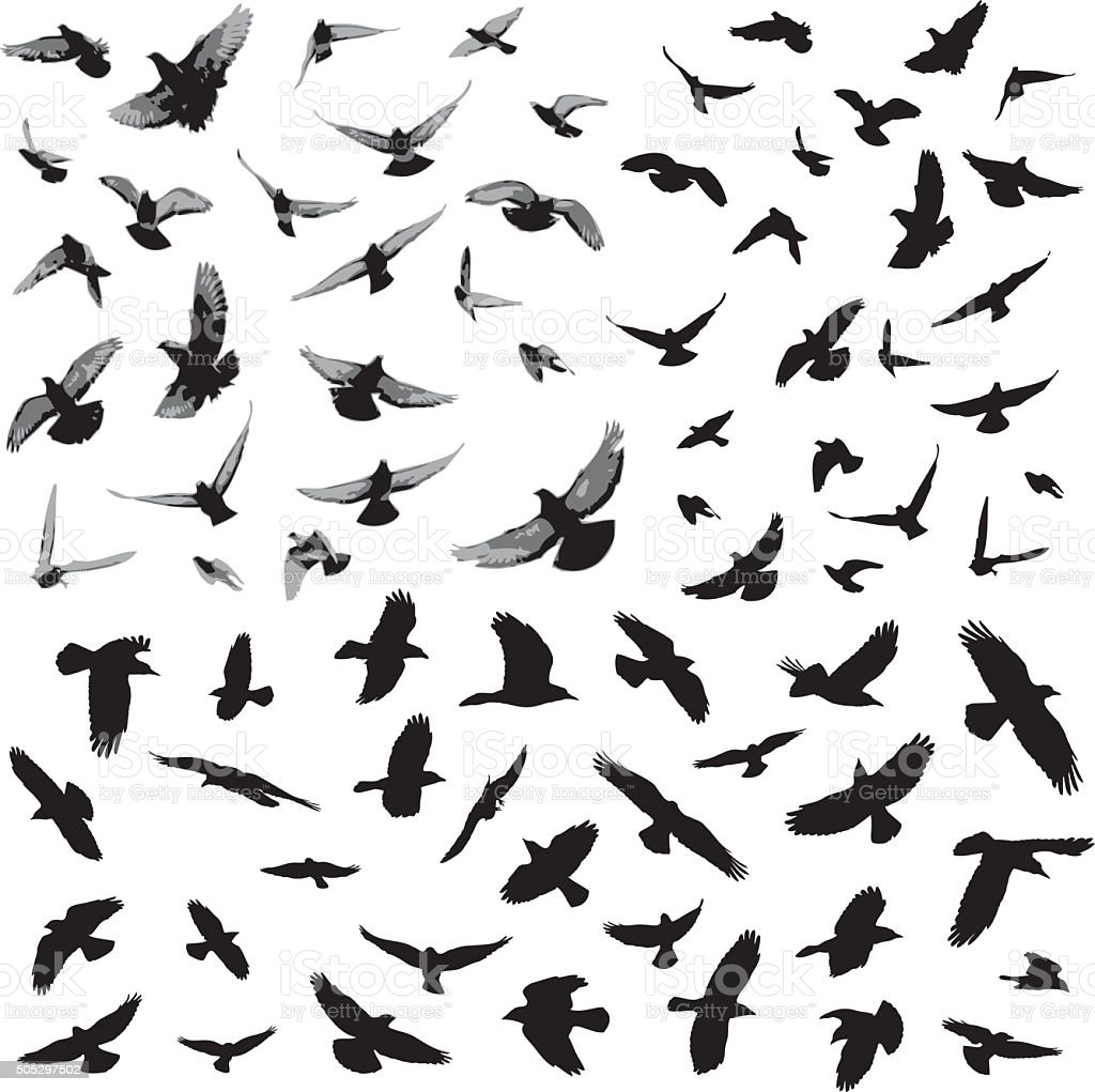 Bird silhouettes vector art illustration
