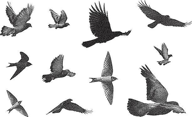 Bird Silhouettes vector art illustration