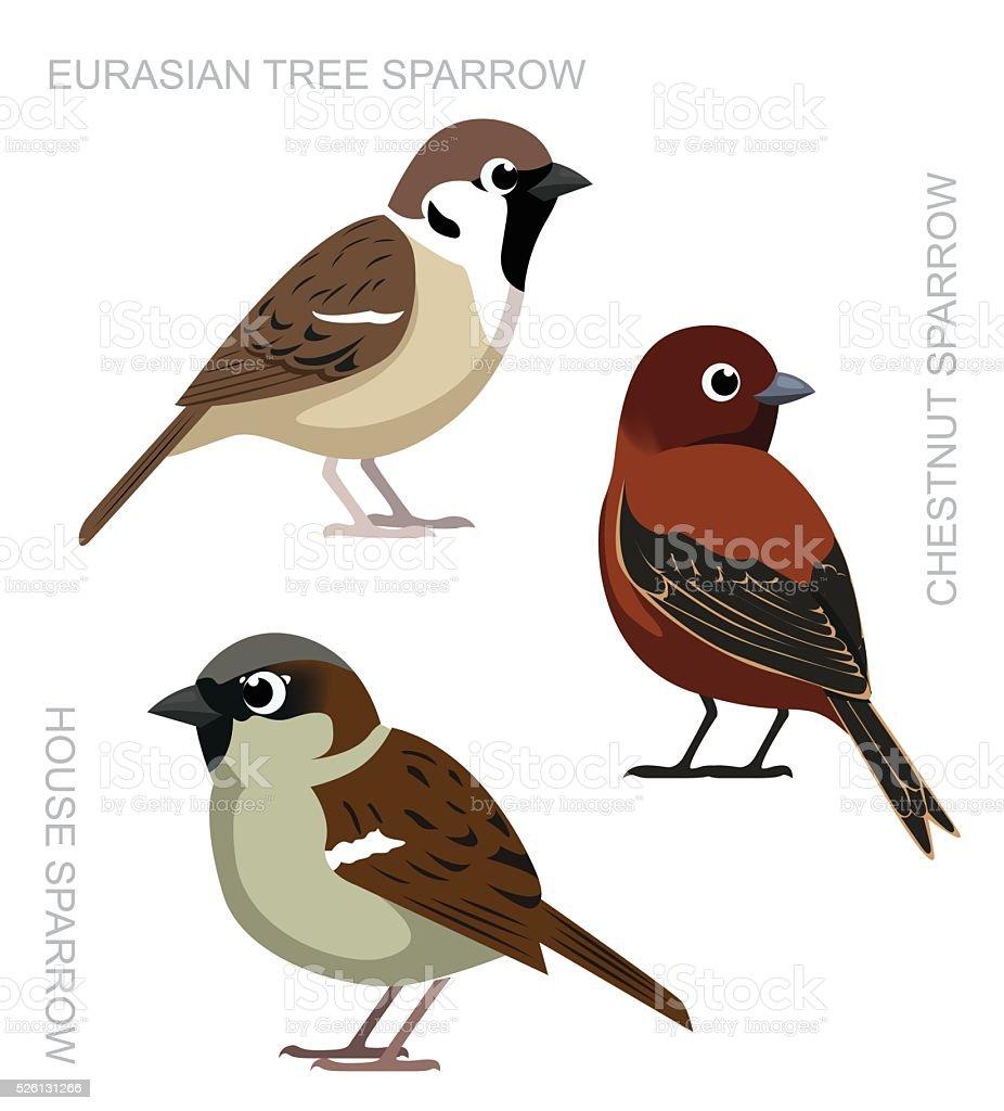 royalty free sparrow clip art vector images illustrations istock rh istockphoto com clipart sparrow bird sparrow clipart images