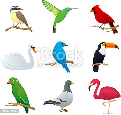 Realistic Bird species collection, with nine different bird species vector illustration.