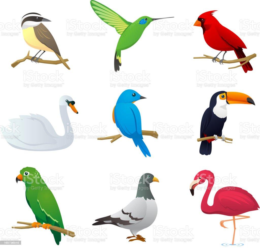 Bird species collection 1 vector art illustration