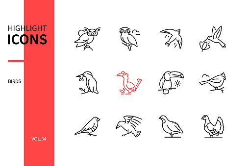 Bird species - line design style icons set on white background. Black images of little owl, swift, hummingbird, kingfisher, great hornbill, toucan, crested tit, munia, raven, perdix, black grouse